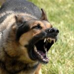 Cynophobia How to Overcome Your Fear of Dogs
