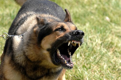 cynophobia overcome the fear of dogs