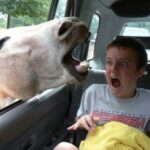 Equinophobia | How to Overcome Your Fear of Horses