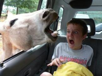 Equinophobia - how to overcome your fear of horses