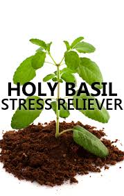 Basil Natural Stress Relief - 7 Health Benefits of Basil