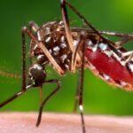 Zika Virus Spread Symptoms Diagnosis and Treatments